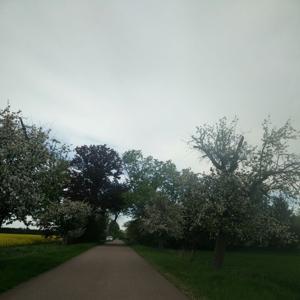 Kleines wäldchen zwischen Köthen und Maxdorf