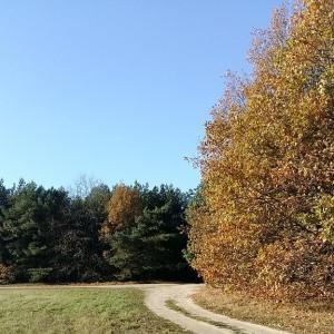 Waldtreff hinter dem Ehrendenkmal an der B188